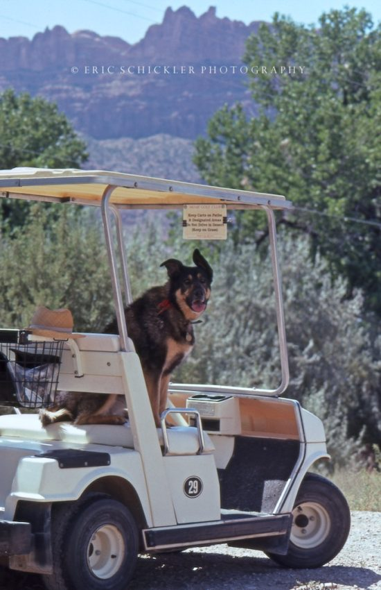 SASHA on Golf Cart- HI-RES- Moab