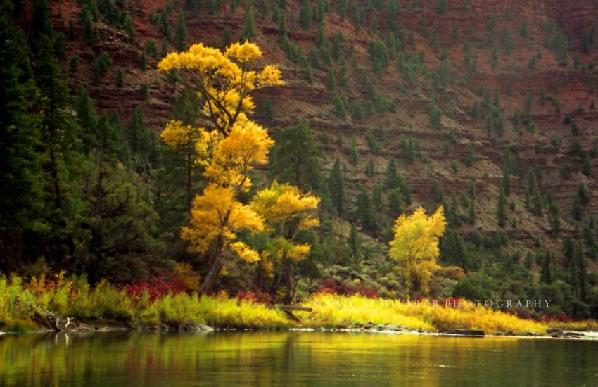 Colorado River Fall Foliage-HI-RES-1990-ish